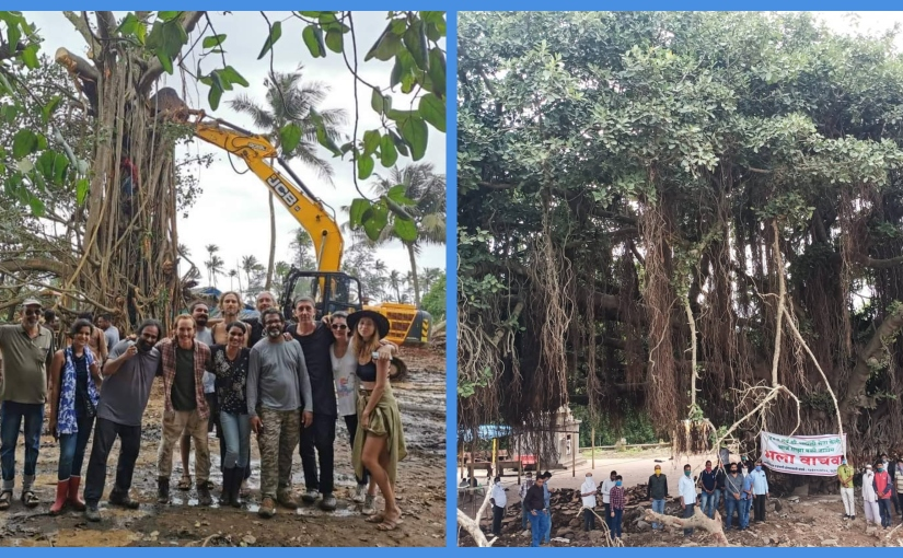 Two sleepy villages, two very special Banyan trees, and a manmademiracle