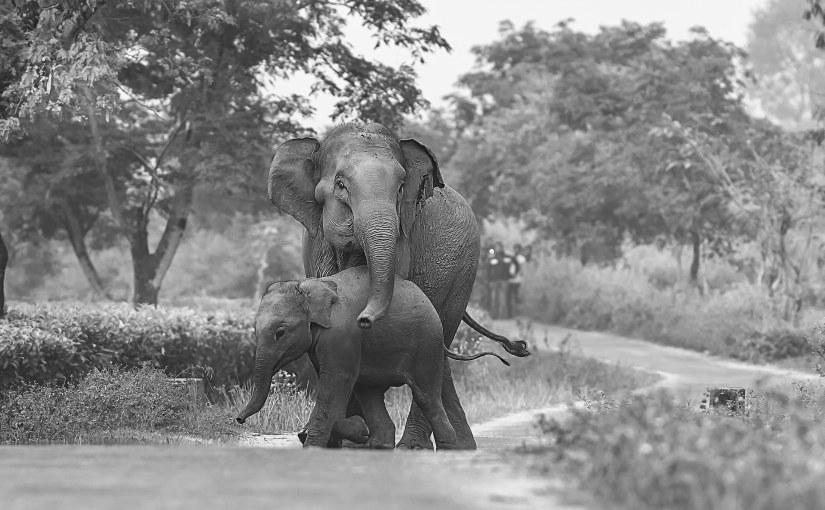 """It is tragic that people make elephants run like rats by throwing fireballs atthem"""